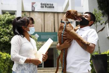 Uno de los perritos que cayó al socavón de Puebla, ya está con su familia