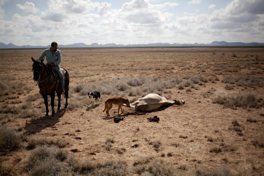 """Sequía en México generada por fenómeno """"Celda de Hadley"""": SMN"""
