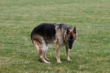 Murió Champ, uno de los perros de la familia de Joe Biden