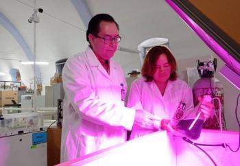 IPN estudia proteínas de alga Spirulina para fortalecer el sistema inmune