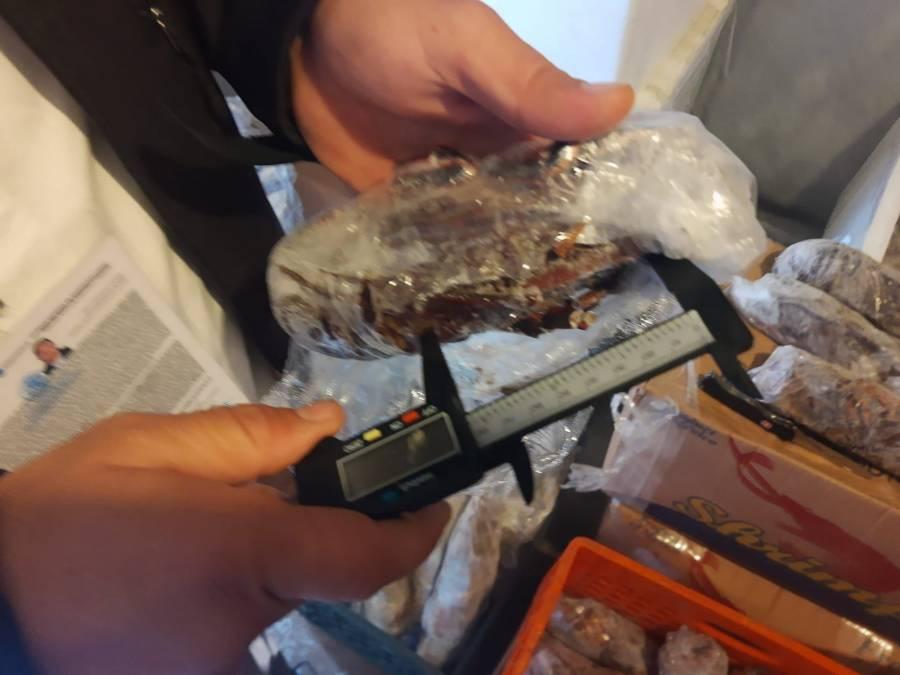 Policía de pesca retiene más de 179 mil piezas de producto marino: Conapesca