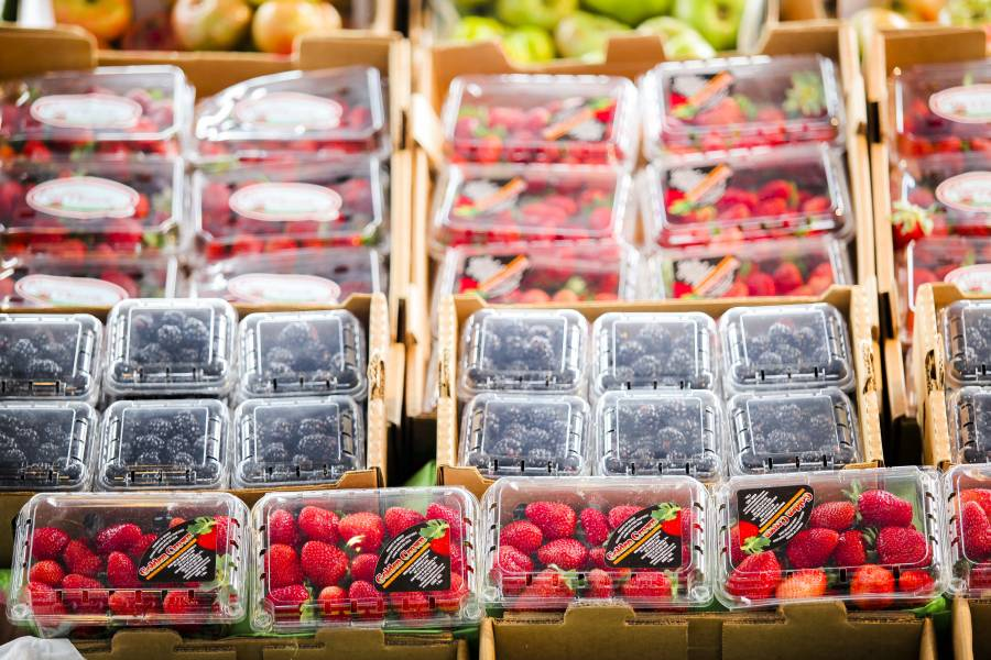 En 2020, comercialización de frutillas deja 9 mil mdp en BC