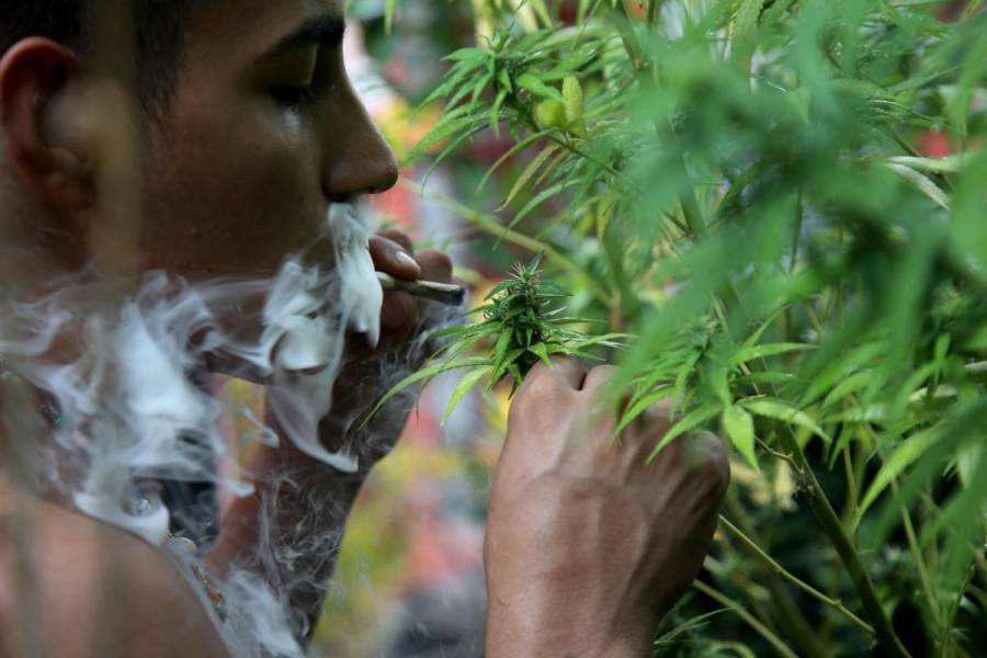 Mariguana sigue sin poderse fumar en la calle, ni comprarse, tras resolución de SCJN