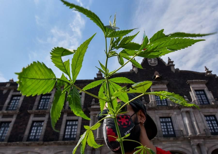 INAI pide a Cofepris difundir normas vigentes sobre uso de la cannabis