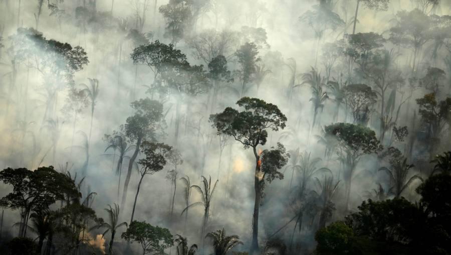 Dióxido de carbono es más peligroso para la Amazonia que la deforestación: investigación