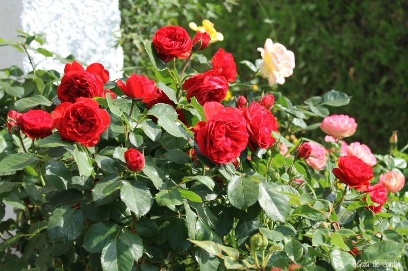 Agricultura promueve el mejoramiento de 10 grupos de familias de plantas ornamentales