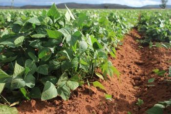 Agricultura apoyará a productores de Durango y Zacatecas con semilla certificada de frijol y grano