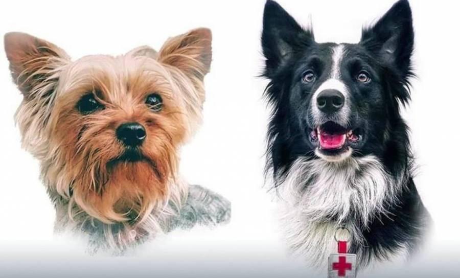 Arrestan a presunto asesino de Athos y Tango, perros rescatistas de Querétaro