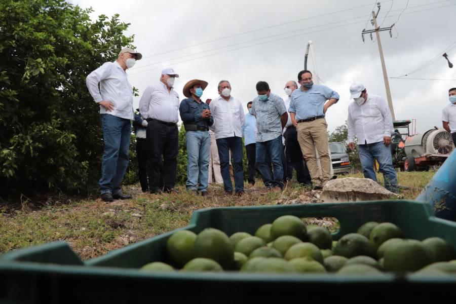 Sur sureste puede ser potencia productora de alimentos para México y el mundo: Agricultura