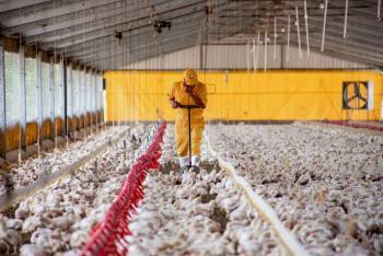 Agricultura y avicultores acuerdan reforzar acciones de la campaña contra la influenza aviar