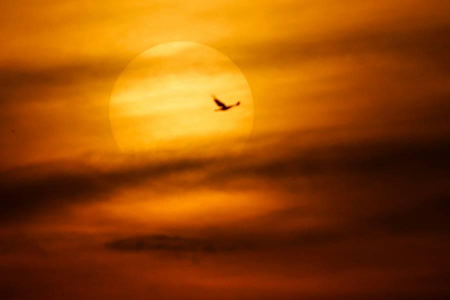 """Alerta la Nasa de """"apagón"""" por llamarada solar"""