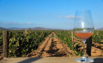 Premian a vinos mexicanos en Bruselas