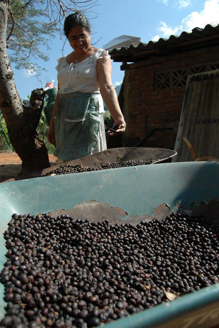 Analizan nueva ley para el impulso de la cafeticultura nacional