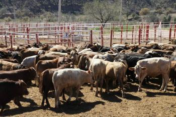 México y Estados Unidos firman protocolo para movilización de ganado de alto registro certificado