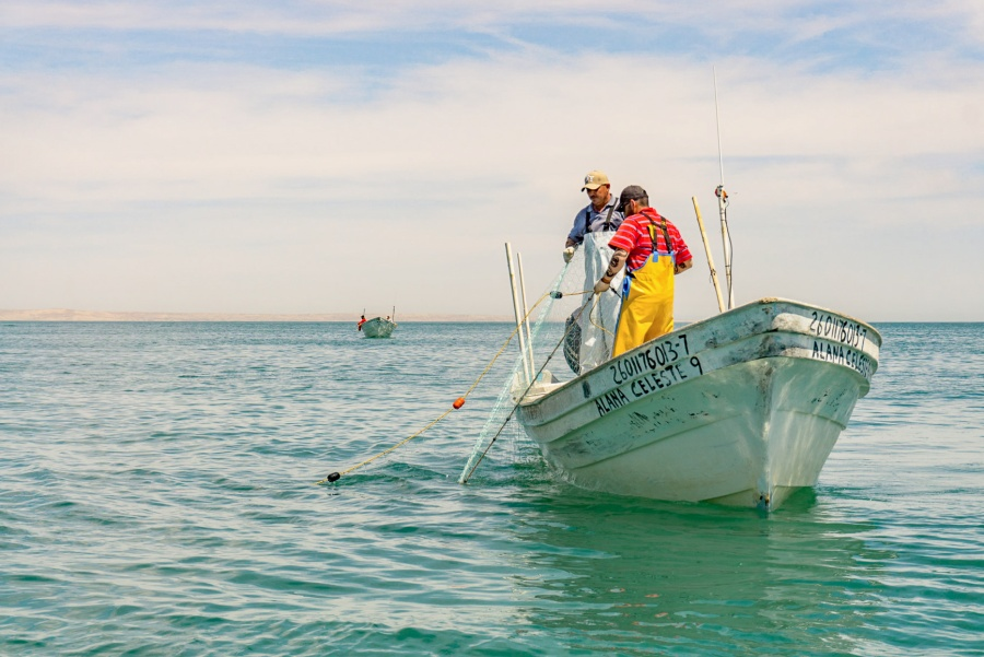 Inicia la temporada de captura de diversas especies marinas: Agricultura