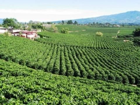 Corea, atractivo mercado para el café mexicano