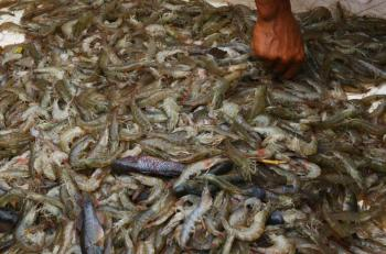 México pide a EEUU levantar el embargo a pesca ribereña de camarón