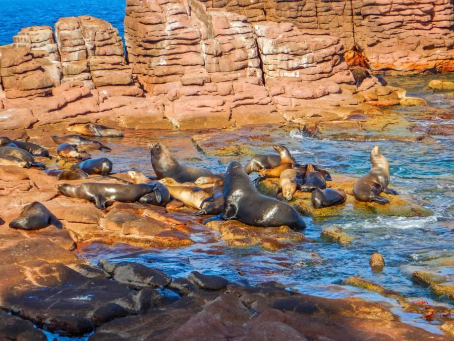 Analiza IPN mortandad de lobos marinos del Golfo de California por cambio climático