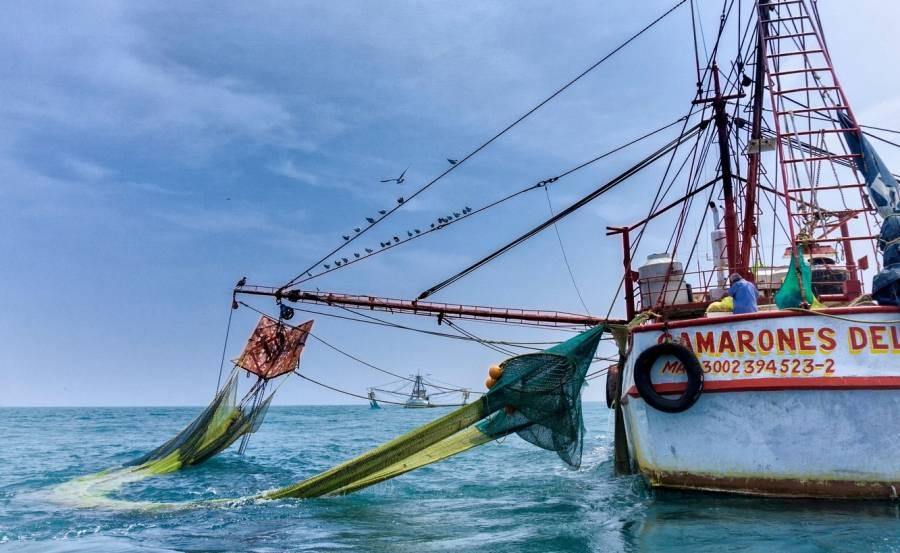 México y EEUU trazan ruta para levantar embargo a camarón mexicano