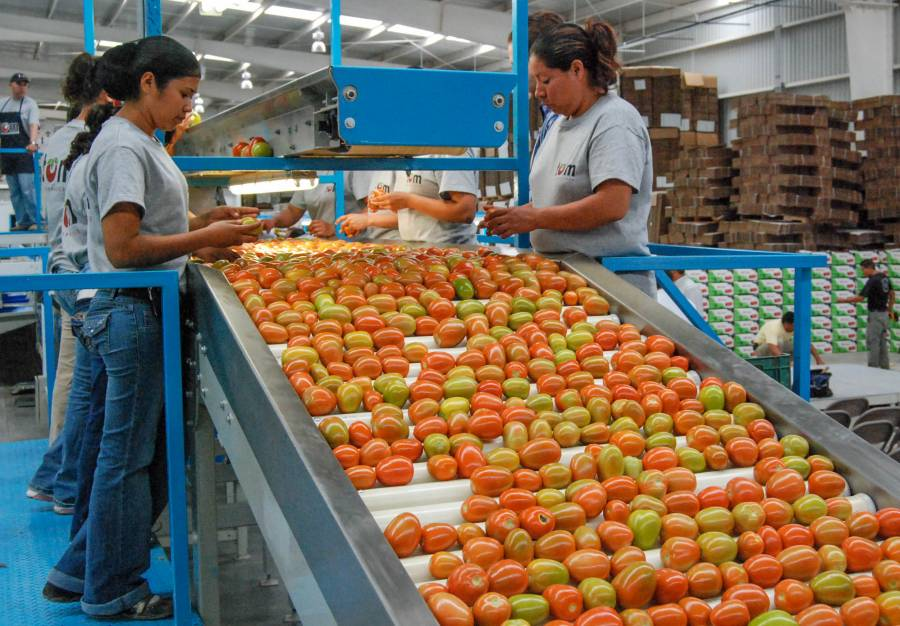 Balanza comercial agroalimentaria presenta superávit en primer semestre de 2021