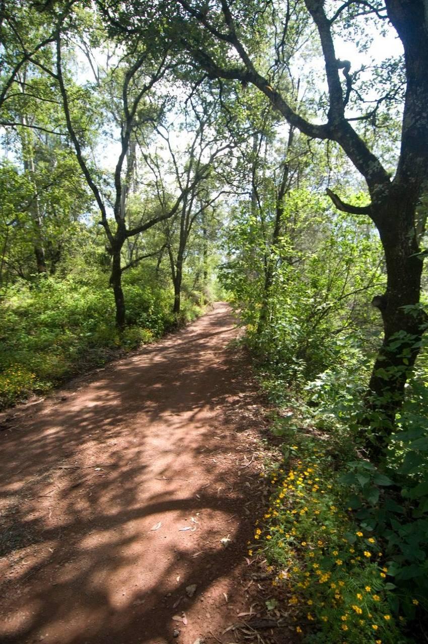 En Puebla, Flor del Bosque será una zona natural protegida