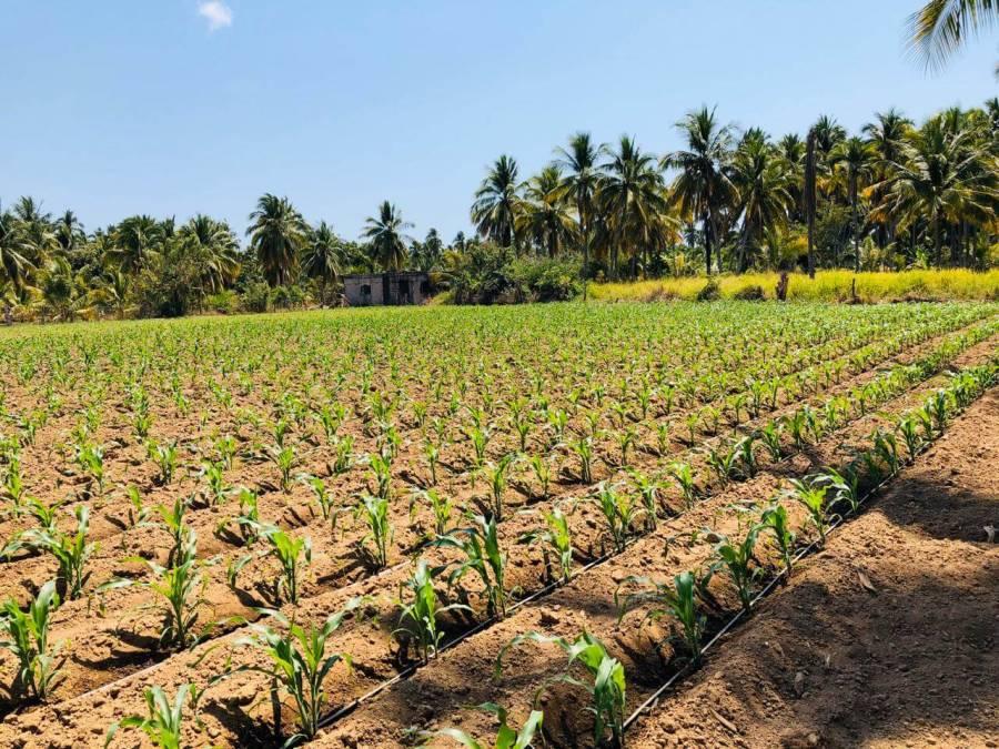 Alertan que el estado de Guerrero carece de política agroalimentaria