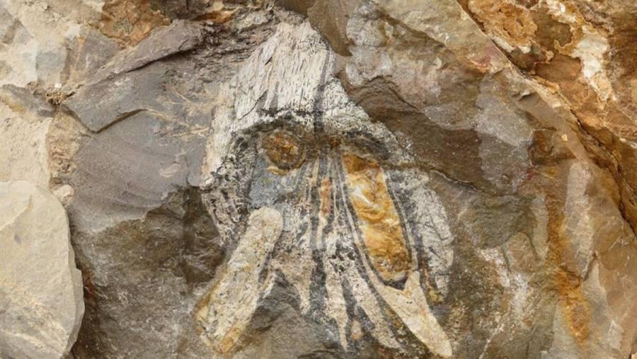 En Egipto descubren un fósil de una nueva especie de ballena anfibia