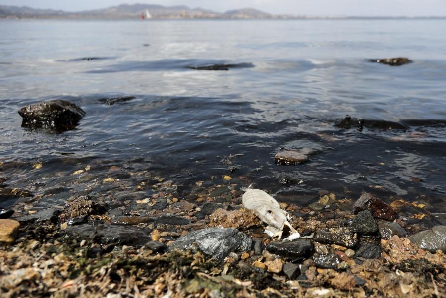 Miles de personas hacen cadena humana en el Mar Menor