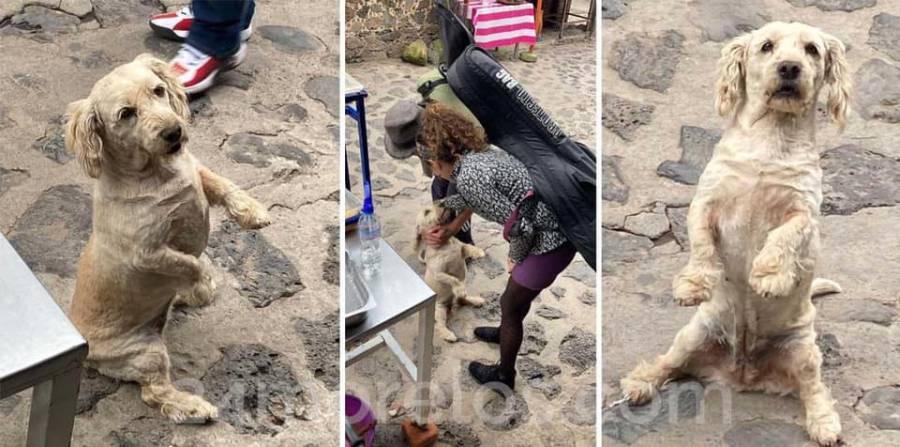 En Tepoztlán, una perrita de nombre Mafufa pide tiernamente comida a turistas