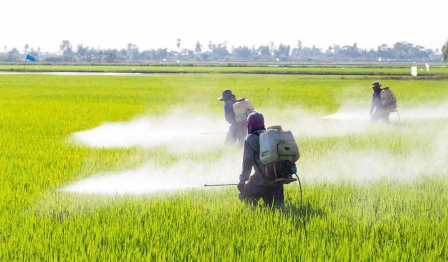 INAI ordena a Semarnat informar sobre importación de glifosato