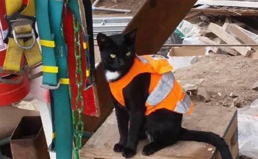 """Gatito se resguarda en construcción y se convierte en el """"capataz"""""""
