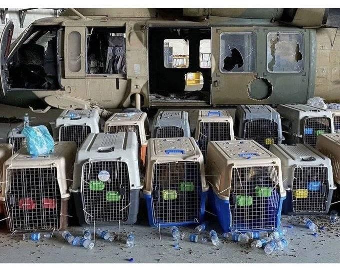 Niega EEUU haber abandonado sus perros en Kabul