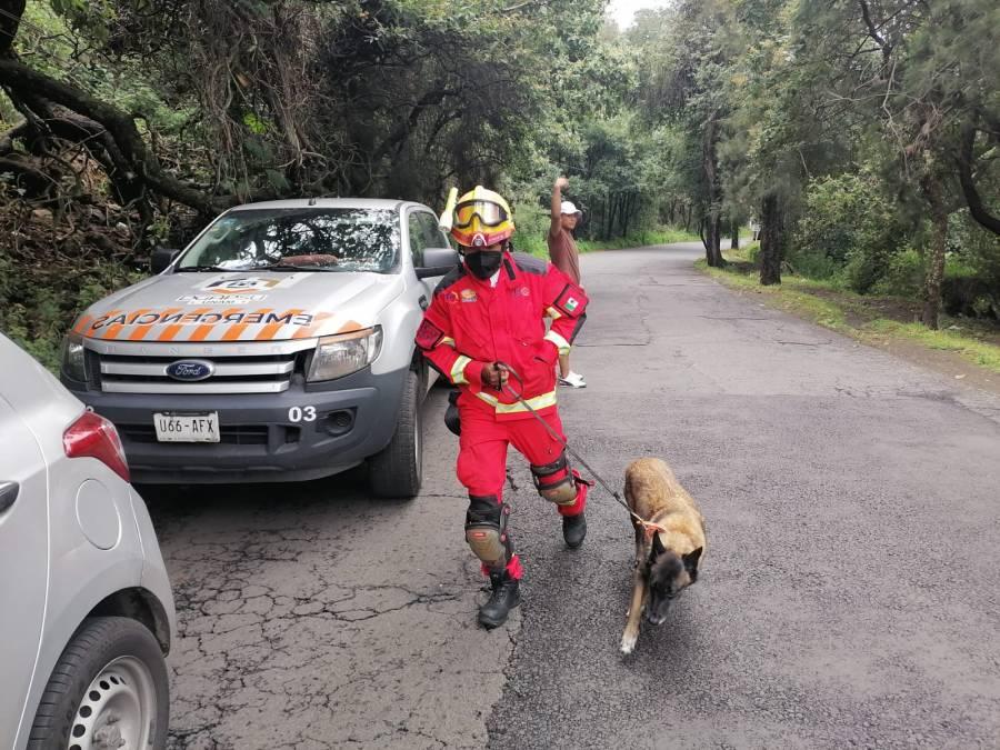 Tras deslave en refugio, cinco perros pierden la vida en Xochimilco