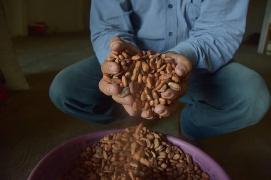 Buscan alternativas para potenciar cadena productiva del cacao