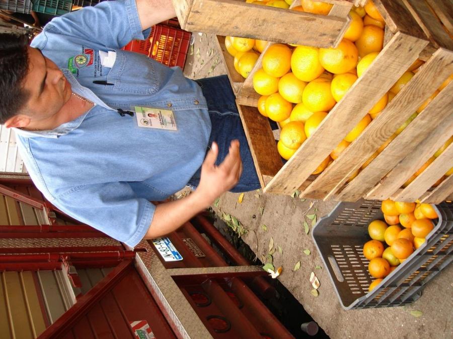 Aumentan 28.3% las exportaciones mexicanas de cítricos entre enero y julio de 2021