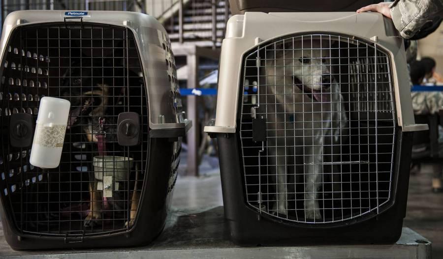 Impulsan multa de hasta 22 mil pesos por maltrato animal en traslados aéreos