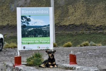 Urgen a crear campañas para el cuidado de las mascotas