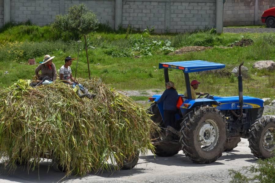 Apoyos al campo se emplean en perjuicio del medio ambiente: ONU
