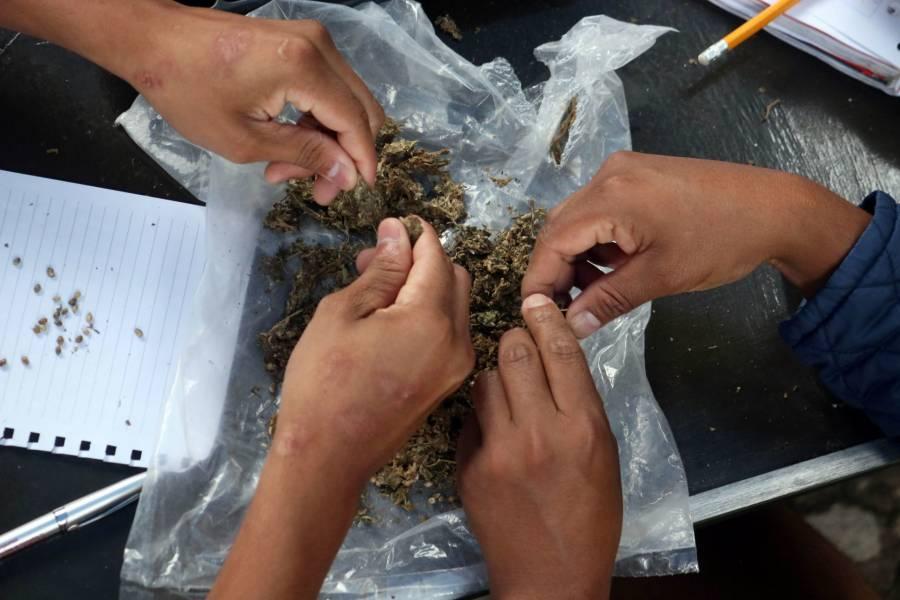 Agencia Mundial Antidopaje revisará prohibición del cannabis
