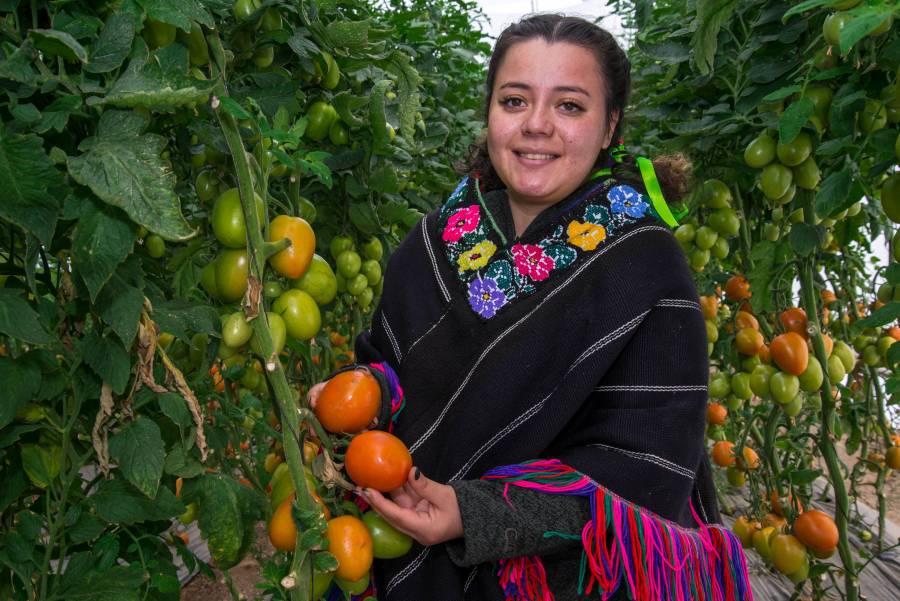 Buscan potenciar exportaciones de pequeños productores a EEUU