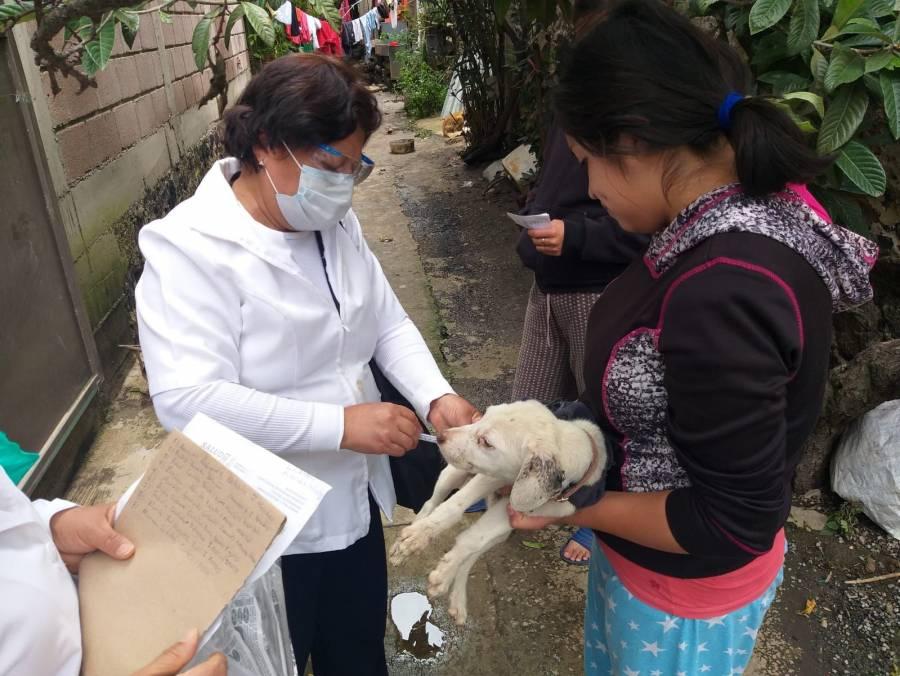 Inició la campaña de vacunación antirrábica en la CDMX