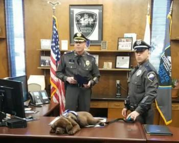 Perrito policía se queda dormido en su propia ceremonia de juramento transmitida en vivo