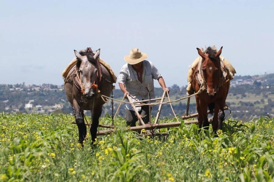 Agricultores mexicanos, expuestos a riesgos de infección por Covid-19