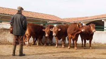 Exportan más de 1 millón de bovinos a EU
