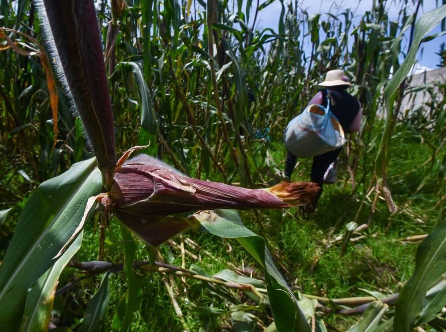 Con reforma agraria, en Perú capacitarán a campesinos