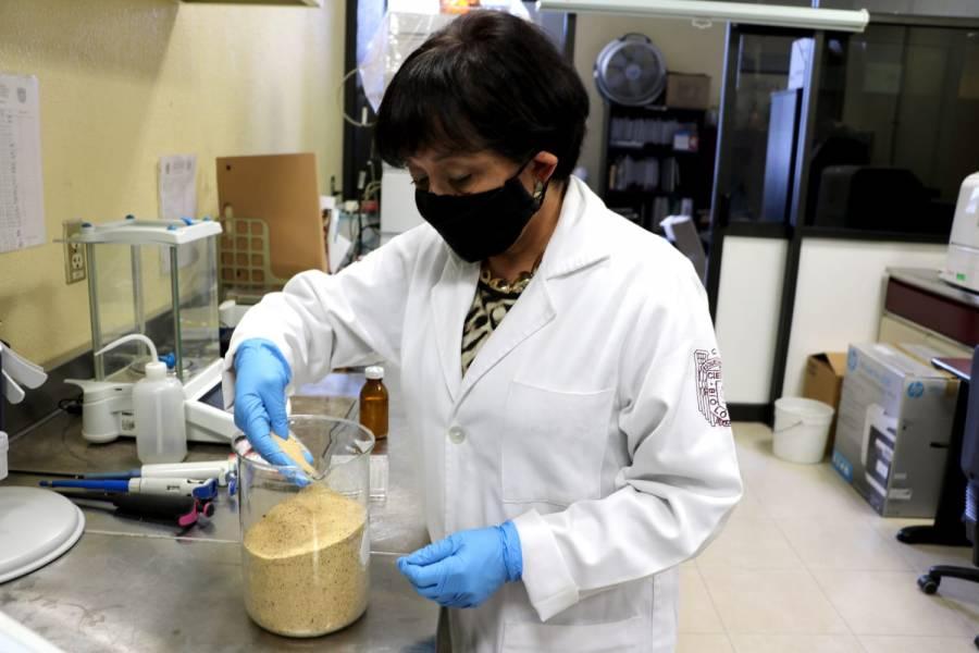 Consumo de semilla germinada de amaranto reduce niveles de colesterol: IPN