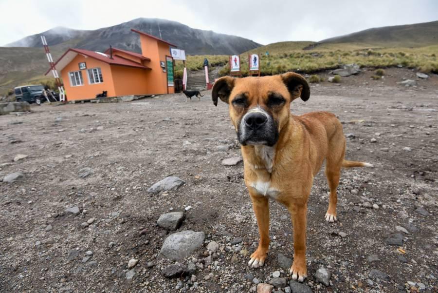 Abandono de mascotas se incrementó por la pandemia, alertan