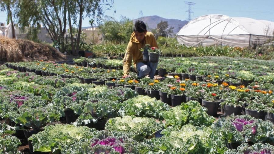 Crecen exportaciones  de flores, miel, cítricos y fresas, a julio pasado