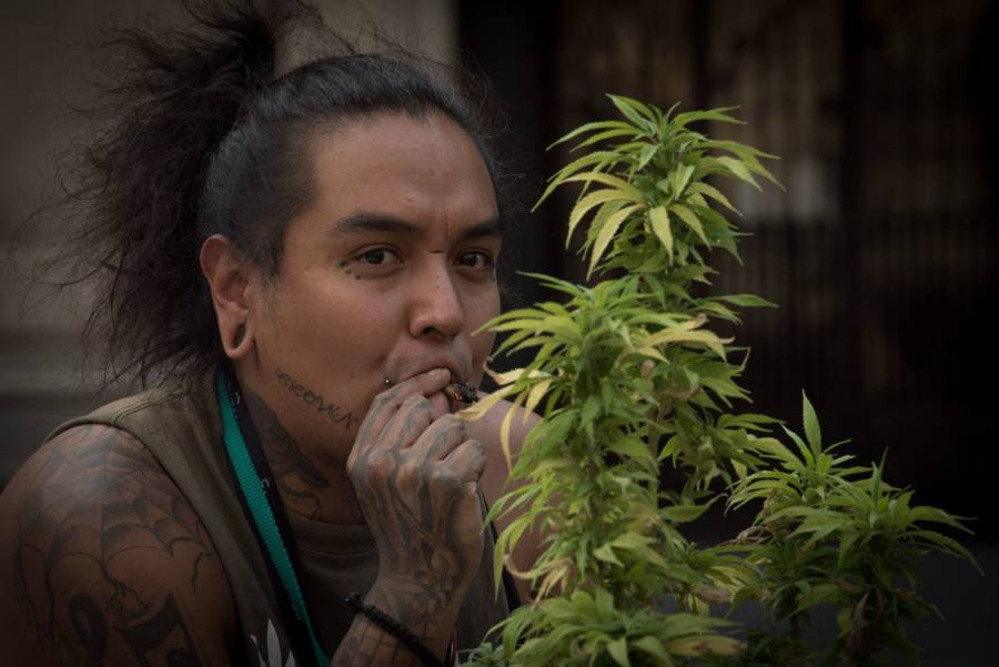 Perfila SCJN perpetuar cárcel para personas usuarias de cannabis, lamenta MUCD