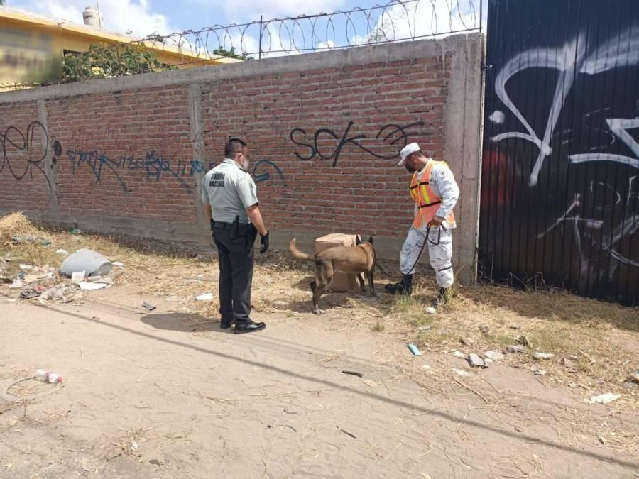 Decomisa Guardia Nacional en Mazatlán 20 kilos de marihuana
